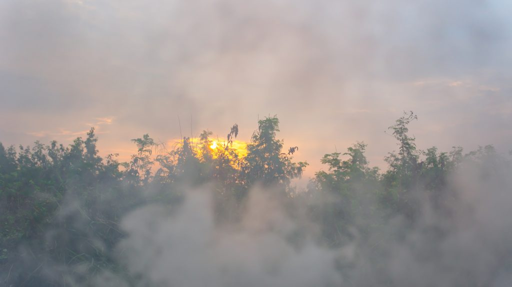 smoke over morning and forest and sun.